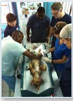 Trinity SOM VSPCA Society Community Service to Local Animals in Need
